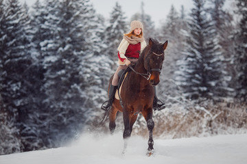 Close-up of horse with rider is walking around field in winter forest. Walking through farm, grazing animals