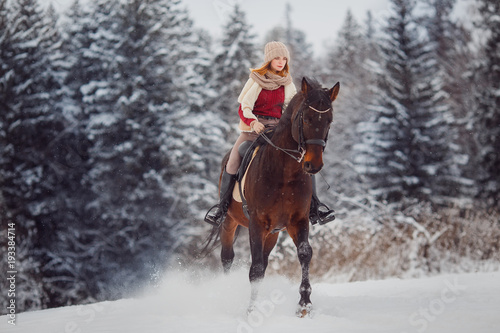 Fototapeta Close-up of horse with rider is walking around field in winter forest. Walking through farm, grazing animals