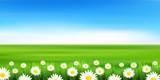 花 草原 風景 背景 - 193386188