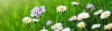 Spring flowers background.