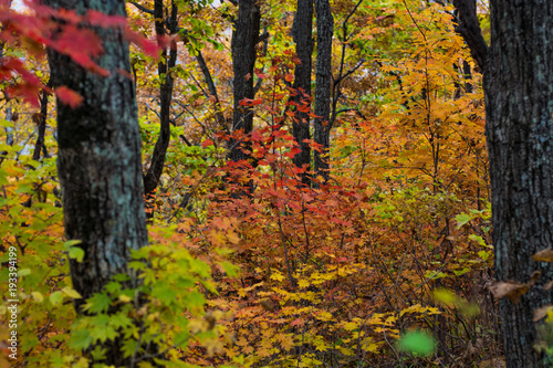 autumn forest, all the foliage is painted with golden color in the middle of the forest road.  © juliza09