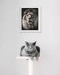 British Shorthair cat and lion portrait above.
