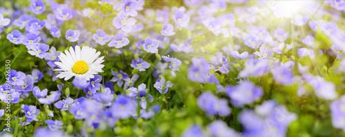 Bunte Blumenwiese im Frühling und Sonnenstrahlen - 193426350