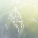 Grass. Fresh green spring grass. Soft Focus. Abstract Nature Background
