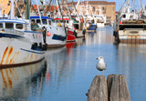 seagull with many fishing boats - 193458778
