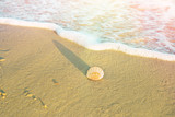 Single Round White Striped Sea Shell on Beach Sand. Foamy Wave Blue Turquoise Water. Golden Sunlight Soft Pastel Colors. Summer Vacation Traveling Wanderlust Concept - 193464717