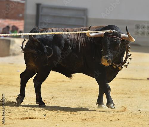 Plexiglas Neushoorn toro en españa