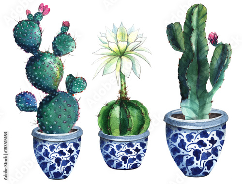 watercolor cactus isolated - 193515163