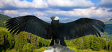 Andean condor   in wildness - 193517355