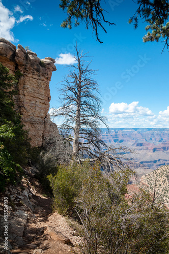 Staande foto Cappuccino Grand Canyon South Rim