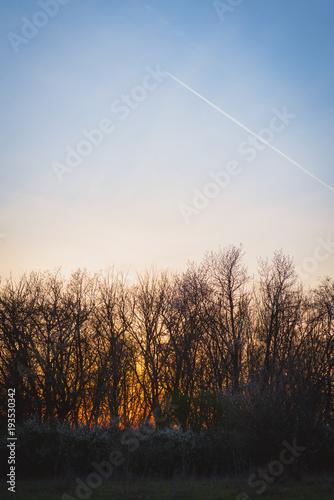 Fotobehang Zalm spring sunset