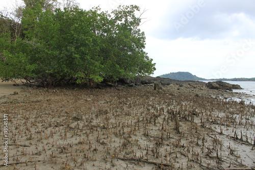 Papiers peints Gris freiliegende Wurzeln von Mangroven bei Ebbe