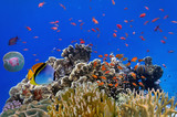 Fototapeta Fototapety do akwarium - Tropical fish on a coral reef © vlad61_61