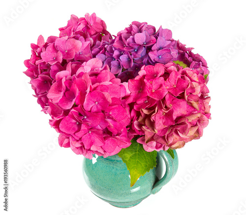 Fotobehang Hydrangea pink hydrangea isolated on white