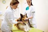 Group of veterinarian examinig dog at clinic