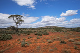 South Australia – outback desert with scrubs and a tree under cloudy sky as panorama © HLPhoto