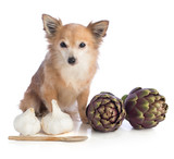 dog posing with artichokes and garlics