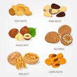 Hazelnut and walnut, corn and soy nuts shell - 193617127