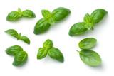 Basil Leaves Isolated on White Background - 193622976