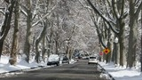Winter snow falls from trees neighborhood road. Winter spring snow in Salt Lake City, Utah. Beautiful white snowy road, trees and yards in neighborhood street. Urban traffic nature landscape cityscape - 193623766
