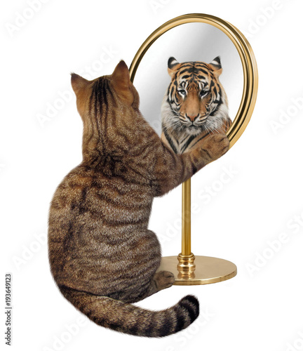 Fotobehang Tijger The cat looks at his reflection in a mirror. It sees a tiger there.