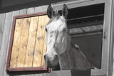 a racehorse appears through the window of the stable - 193650983