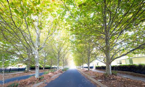 Keuken foto achterwand Herfst Autumn trees lining a country town street