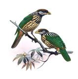 Bird of paradise. - 193653596