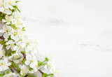 White wooden shabby background with flowering cherry branches. - 193662951