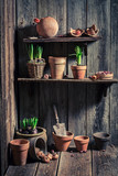 Wooden shed with old clay pots and gardening tools - 193665145