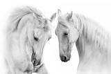Fototapeta Konie - Couple of white horse on white background © callipso88