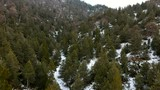 Slowly flying over a snow covered forest on a mountainside in winter - 193700336
