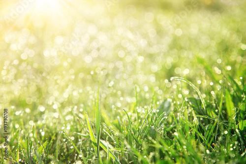 Gras im Frühling