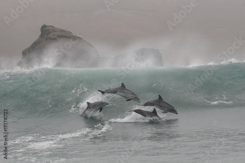 Fotobehang Dolfijn Bottlenose dolphins jumping