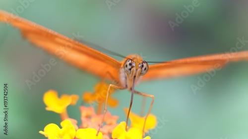 Aluminium Vlinder Papillon