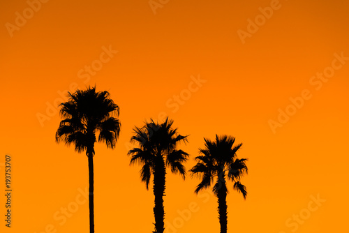 Palm trees silhouette tropical vacation paradise
