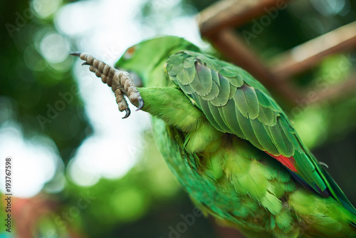 Aluminium Papegaai Close-up of parrot paw