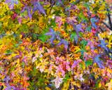 Closeup shot of colorful fall foliage - 193787539