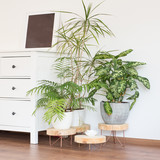 Green modern house plants new design with white wall