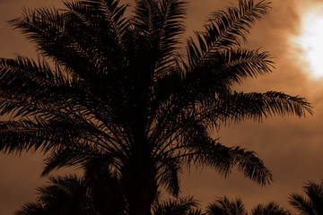 Tropical resort, silhouette of palm tree against sky background