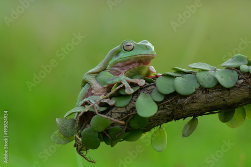 Aluminium Kikker Dumpy Frog on leaf