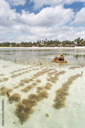 Fotobehang Zanzibar Seaweed agriculture in Zanzibar, Tanzania with beautiful colors of water and sky in background