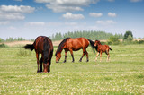 two horses and foal in pasture