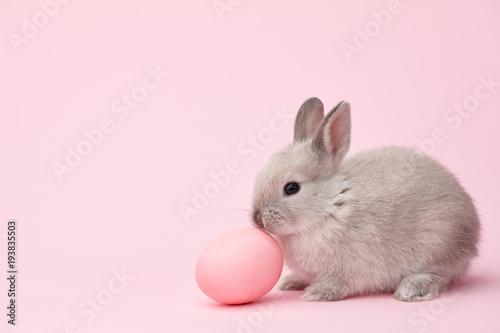 Wielkanocnego królika królik z menchiami malował jajko na różowym tle. Koncepcja wakacje wielkanocne.