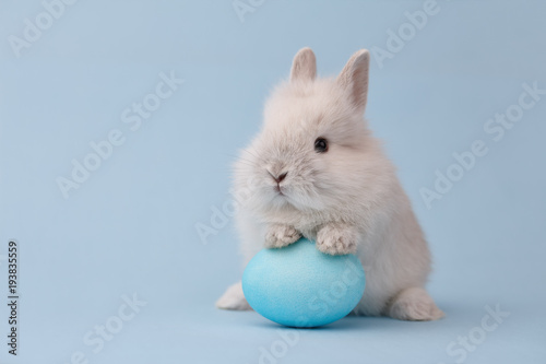 Leinwanddruck Bild Easter bunny rabbit with blue painted egg on blue background. Easter holiday concept.