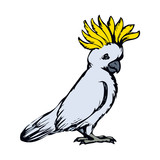 Parrot. Vector drawing - 193838959