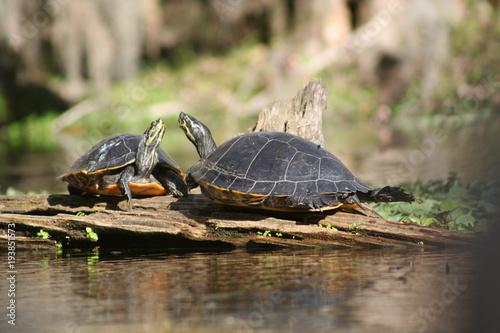 Aluminium Schildpad Turtles