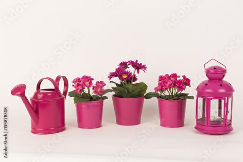 Plexiglas Gerbera Gerberas rosas, farol rosa, regadera rosa y otras flores.