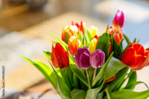 Colorful tulips in the sunlight