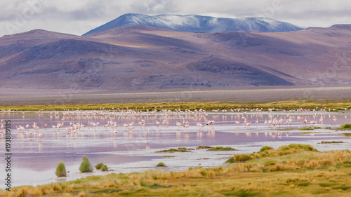 Fotobehang Lavendel Andes region, Bolivia with snow covered volcano and wildlife at the lagoon
